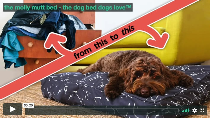 177736bd7333 watch how simple it is to create the comforting bed your dog will  absolutely love