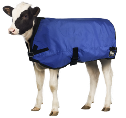 Kiwi Calf Blanket - Showerproof