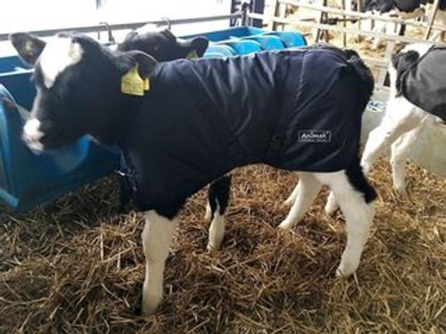Standard Calf Jacket