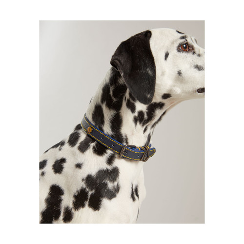 Joules Leather Dog Collar - Blue