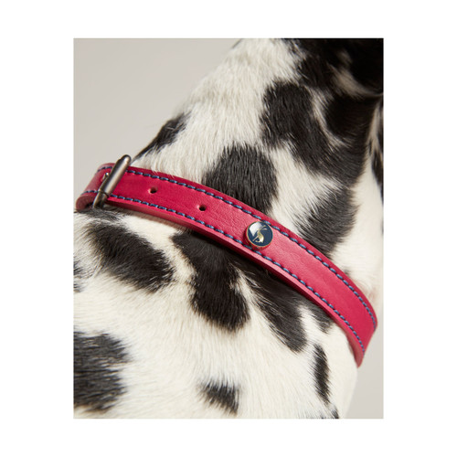 Joules Leather Dog Collar - Pink