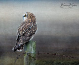 "Short-Eared Owl by Bonnie Block 12"" x 10"""