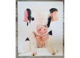 Dolly Pig  / Jody Hatfield