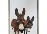 Murray Donkeys / Jody Hatfield
