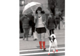 PawZ Dog Boots 12 pack  / Medium Blue