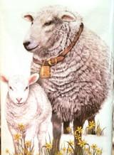 Sheep Spring Towel