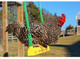Chicken Swing By Fowl Play