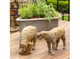 Country Sheep Family set of 3 Park Hill
