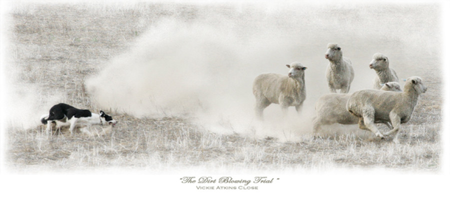 """""""The Dirt Blowing Trial"""" Greeting Cards By Vickie Close"""