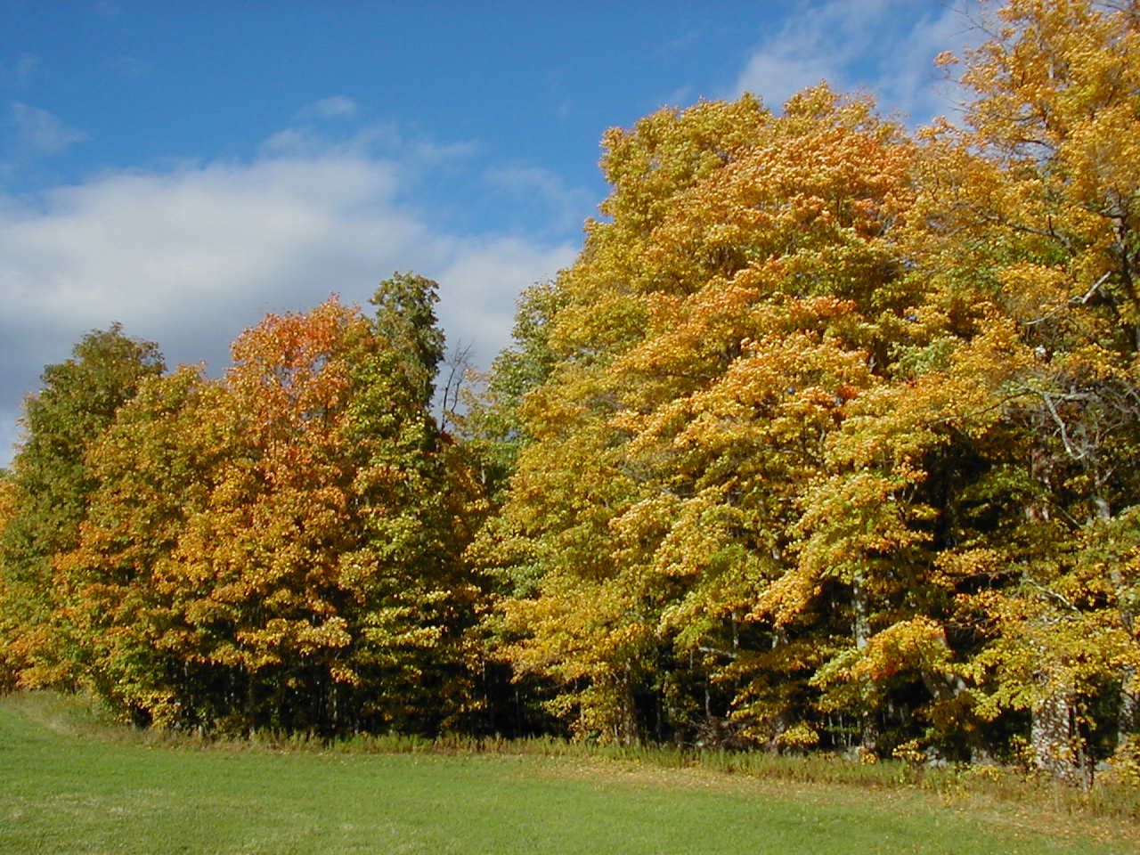 early-maple-fall-colors.jpg