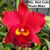 Rlc. Red Crab 'Kuan Miau' - 50mm