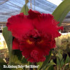 Rlc. Ahchung Ruby 'Red Ribbon' - 50mm