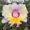 Rlc. Thaksina Candy - 50mm