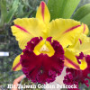 Rlc. Taiwan Golden Peacock 'Orchis' - 50mm