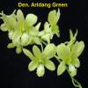 Den. Aridang Green - advanced