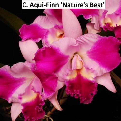 C. Aqui-Finn 'Nature's Best' - advanced