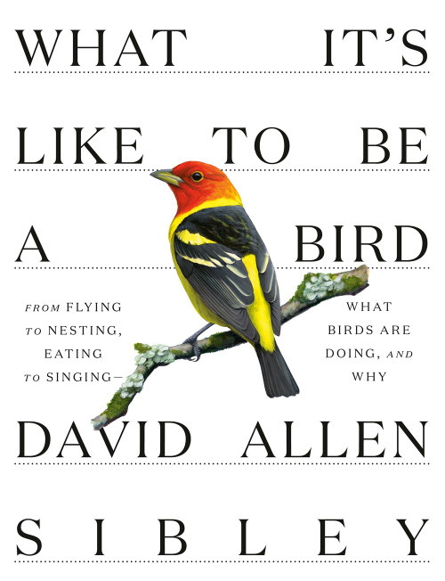 What It's Like to Be a Bird by David Allen Sibley