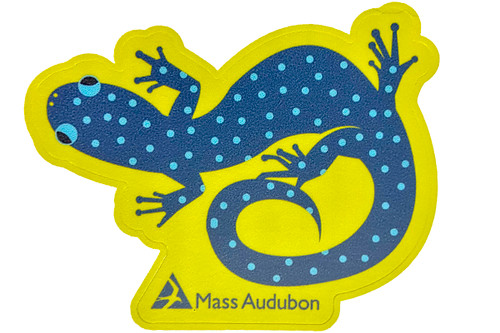 Mass Audubon Salamander Sticker