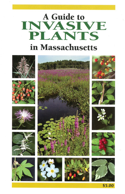 A Guide to Invasive Plants in Massachetts