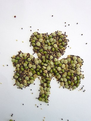 St. Patrick's Day Certified Organic Non-GMO Sprouting Seeds Mix Certified Organic Mung Bean, Green Pea, Red Clover, Mustard