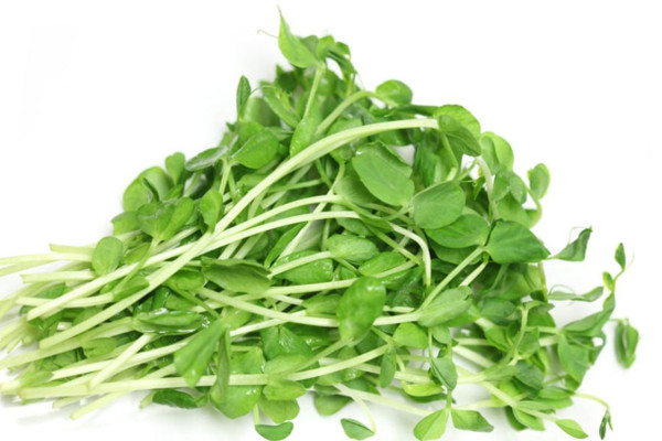 Fresh Pea Shoots from The Sprout House