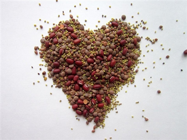 Valentine Day Certified Organic  Non-GMO Sprouting Seeds Mix Certified Organic  Red Lentil, Clover, Adzuki, China Red Radish 1 pound (price includes shipping)