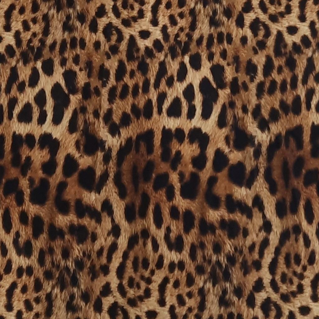leopardcropped.jpeg