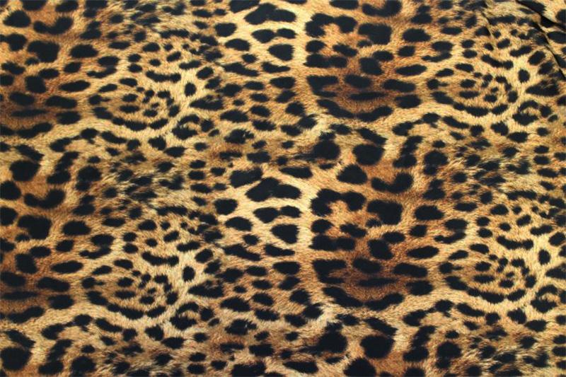 new-leopard.jpg