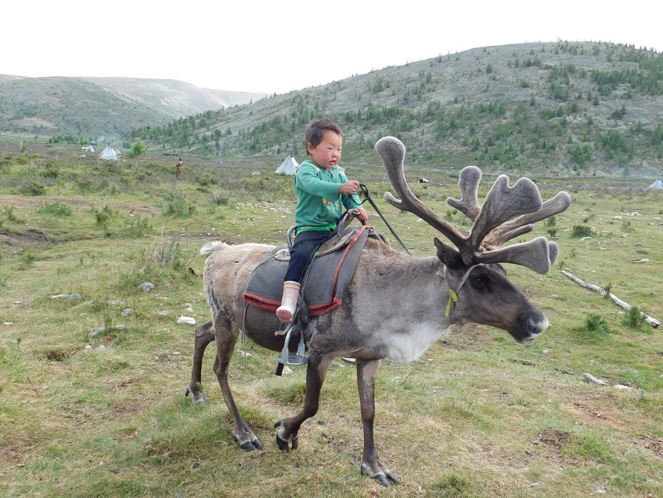 Ride to the Reindeer