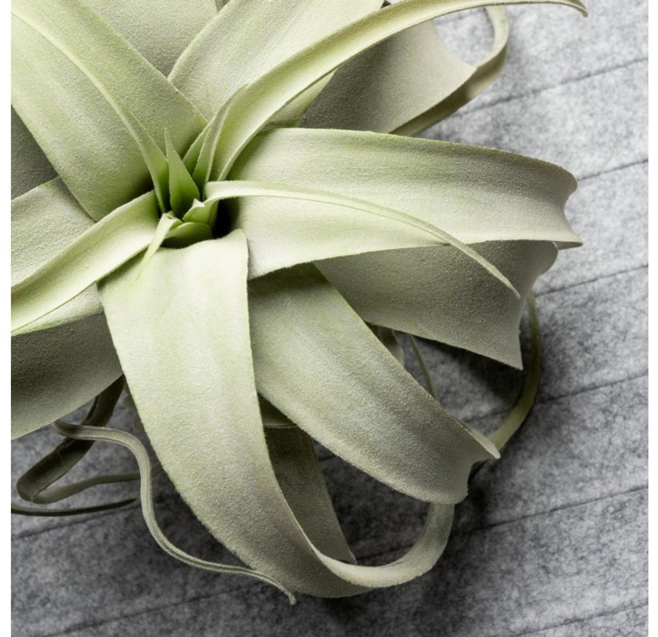 Xerographica Grey Plant Artfully Crafted Faux Plant