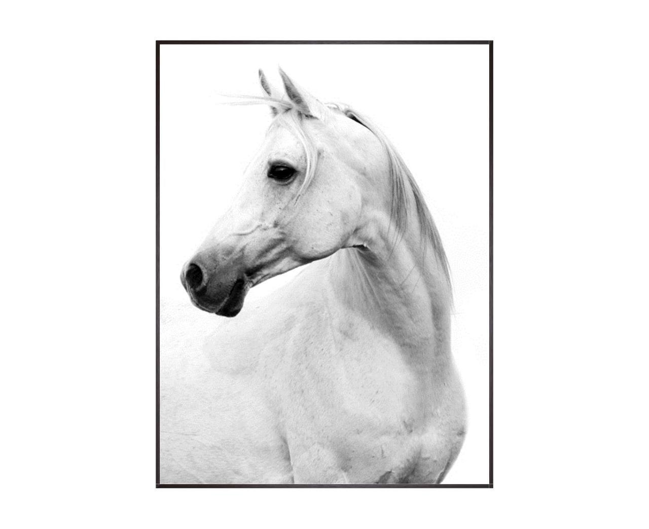 Le Cheval Blanc White Horse Framed Art