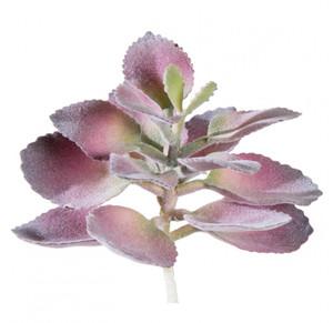Kalanchoe Burgundy Morata Succulent Faux Plants