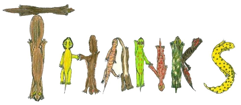 gecko-thank-you-message.jpg