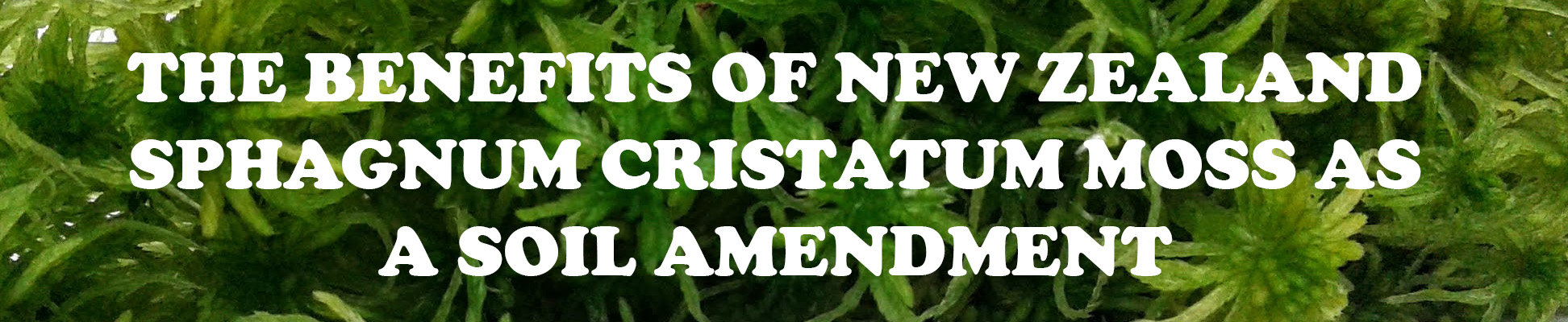The benefits of using New Zealand sphagnum cristatum Moss as a soil amendment.