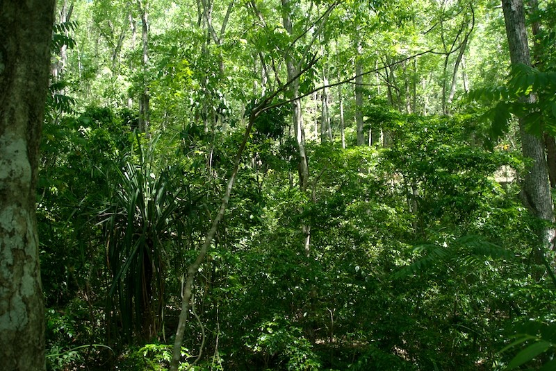 The habitat of Lygodactylus williamsi in Kimboza Forest, eastern slopes of the Uluguru Mountains.