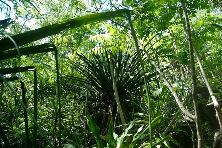 The habitat of Lygodactylus williamsi in Kimboza Forest.