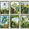 The Druid Plant Oracle (Cards & Book Set)