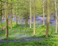 What is woodland burial? Interview Colney Wood, Norwich