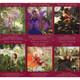 Fairy Tarot Cards by Radleigh Valentine