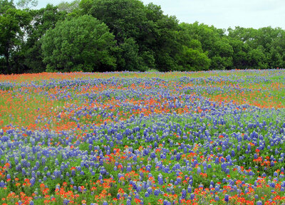 The Best Bluebonnet Fields in Central Texas
