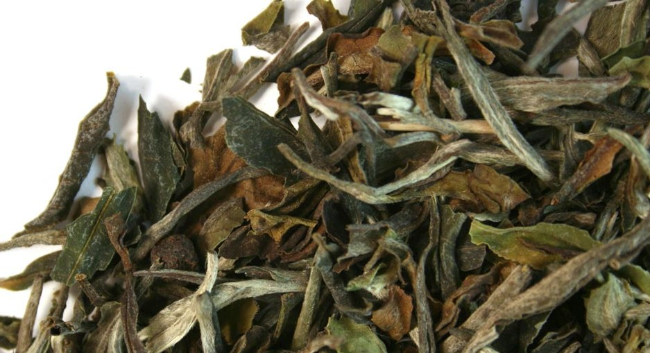 bai-mu-dan-white-tea-crop.jpg