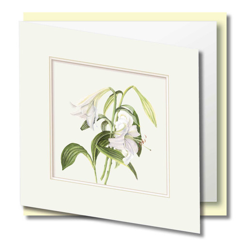 Six Beautiful Greeting Cards , 6 Fabulous Floral and Fruits , Embossed Frame Effect , Cards to Frame and Keep , Blank Inside , Floral Watercolour Art ,