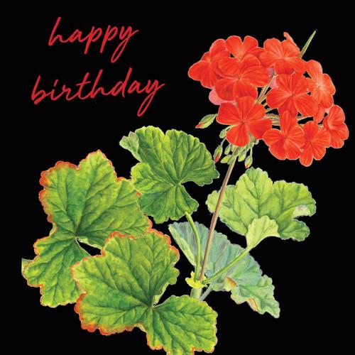 Happy Birthday  Attractive Eye-catching Modern Floral Orange Pelergonium Black Background Red Script