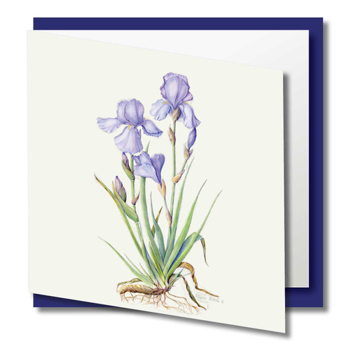 Stunning Art Card, 155mm Square. Carefully Printed onto 300gsm Ancient Silk,off white Art board with a silky textured finish to give a pure representation of the original painting. Supplied with a Cream high quality Envelope in protective Cello