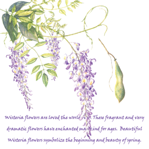 Floral Greeting Card , Wisteria Purple flower , background text describing the flower , Blank Inside , Floral Watercolour Art ,