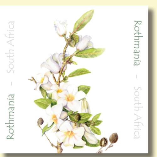 Christmas Greeting Card , Rothmania flower , Blank Inside , Botanical Watercolour ,