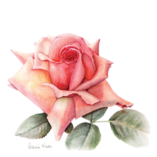 Floral Greeting Card , Pink Rose Flower , Blank Inside , Watercolour Art , Botanical Card to Frame ,