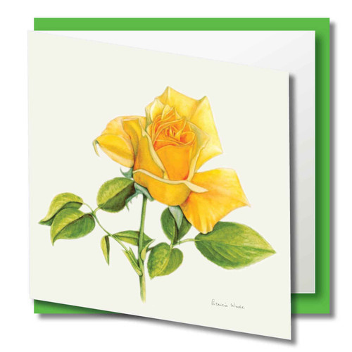 Floral Greeting Card , Yellow Rose Flower , Blank Inside , Watercolour Art , Botanical Card to Frame ,