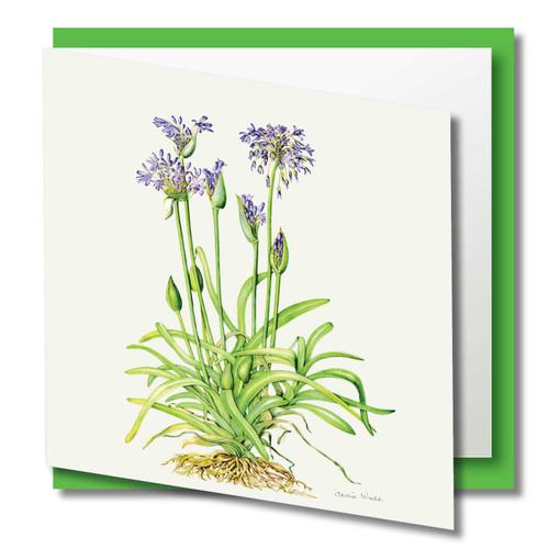 Floral Greeting Card , Blue Agapanthus Flower , Blank Inside , Watercolour Art , Botanical Card to Frame ,