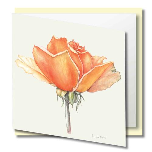 Floral Greeting Card , Pink Iceberg Rose flower , Blank Inside , Watercolour Art , Botanical Card to Frame ,